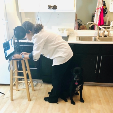 Young woman wearing a white chef's coat leans over a laptop on a stool. A dark dog sits behind her.